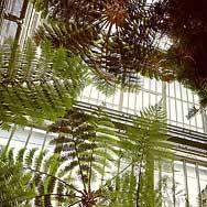 Im Farnhaus des Botanischen Gartens Berlin-Dahlem (Foto: Gregor Hohenberg)