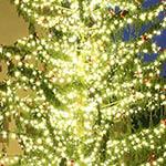 Weihnachten (Tannenbaum)
