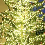 Weihnachte (Tannenbaum)