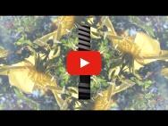 Videopremiere - Otis Sandsjö