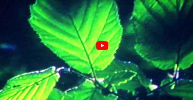 Otis Sansjö - Waldo (Screenshot: YouTube)