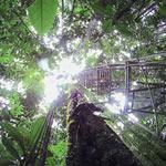 Espírito Da Floresta